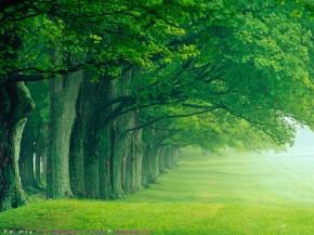 Miškų gyventojai